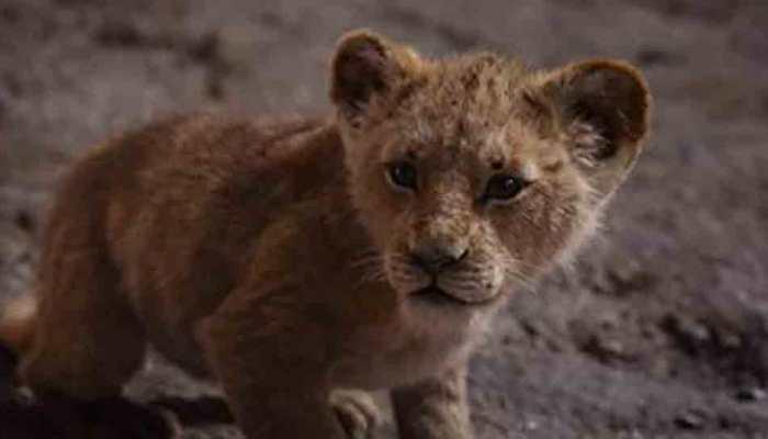 Shah Rukh Khan's 'The Lion King' heads to UAE