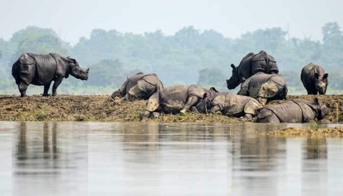 80% Kaziranga National Park submerged, Assam floods death toll rises to 37