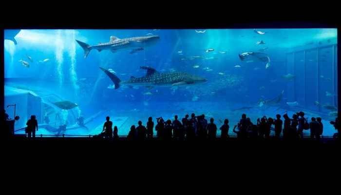 World's highest aquarium starts trial operation in China's Qinghai