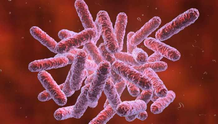 Chinese scientists create super bacterium which may spark superhuman race