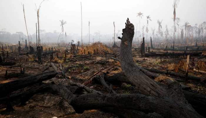 G7 nations to release emergency aid for Amazon forest fire crisis