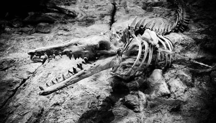 'Strange' marsupial giants roamed ancient Australia