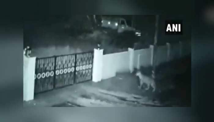 On Camera: Leopard enters house in Karnataka's Shivamogga, takes away pet dog