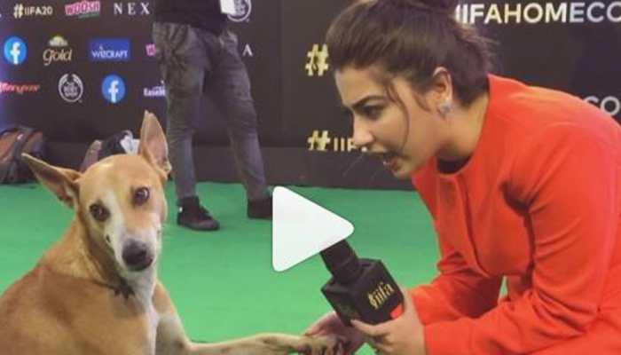 Meet the dog who walked IIFA 2019 red carpet, got 'interviewed' by Aditi Bhatia