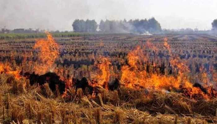 189 farmers penalised in Haryana for stubble burning