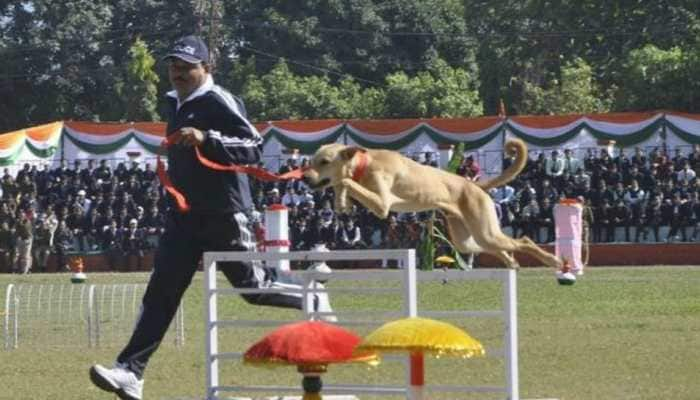 In a first, stray dog trained for sniffer squad, courtesy Uttarakhand Police