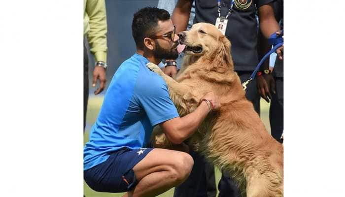 Virat Kohli named  PETA India's 2019 Person of the Year