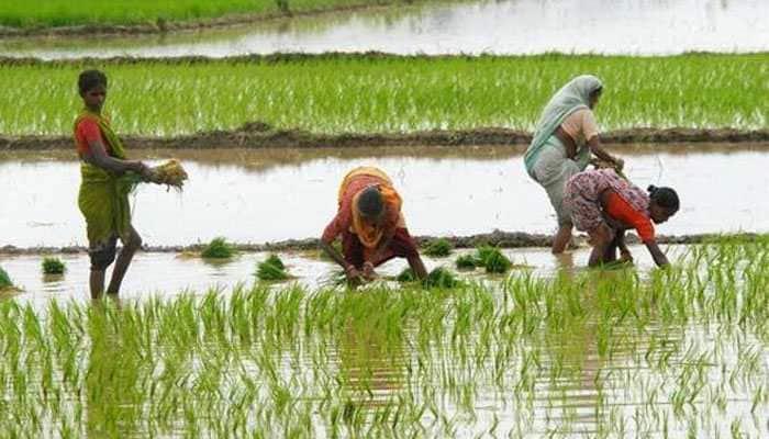 Heavy rain, hailstorm damages crops in Madhya Pradesh's Dewas
