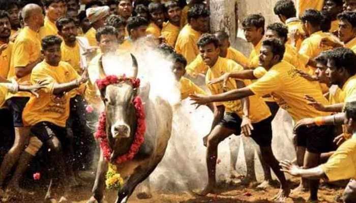 Jallikattu, Tamil Nadu's bull-taming sport, begins in Madurai after authorities review arrangements