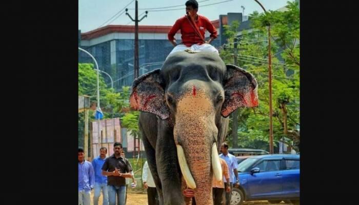 Guruvayur temple's elephant Gajaratnam Padmanabhan dies, devotees offer tributes at funeral