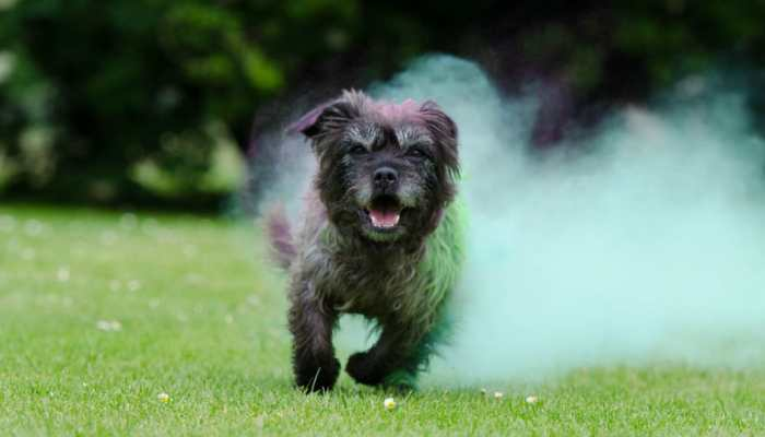 Holi 2020: How to celebrate the festival without turning your pet's day grey!