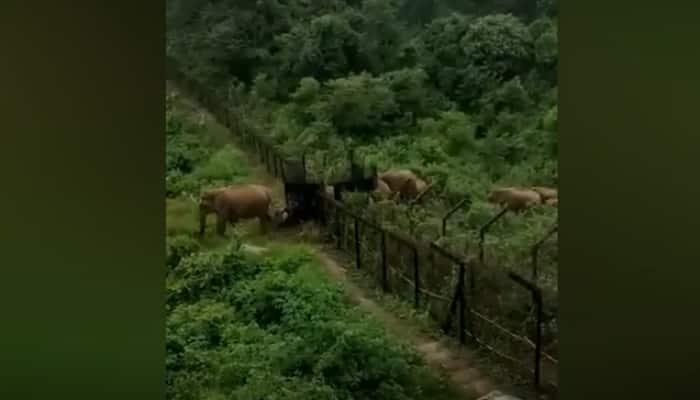 Watch Video: Elephants entering into Meghalaya forests on India-Bangladesh border