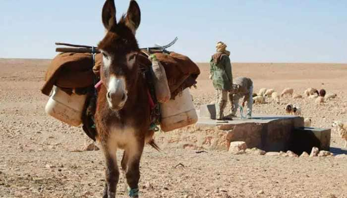 India to soon get dairy for donkey milk, one litre milk may sell for Rs 7,000