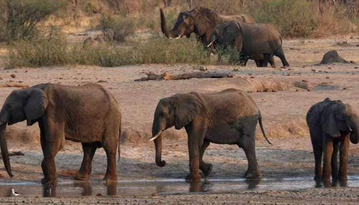 22 elephants in Zimbabwe die of mysterious bacterial infection
