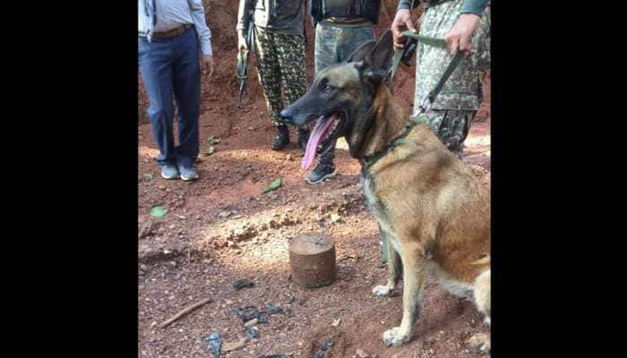 ITBP dog 'Sophia' sniffs out IED in Chhattisgarh, saves many lives