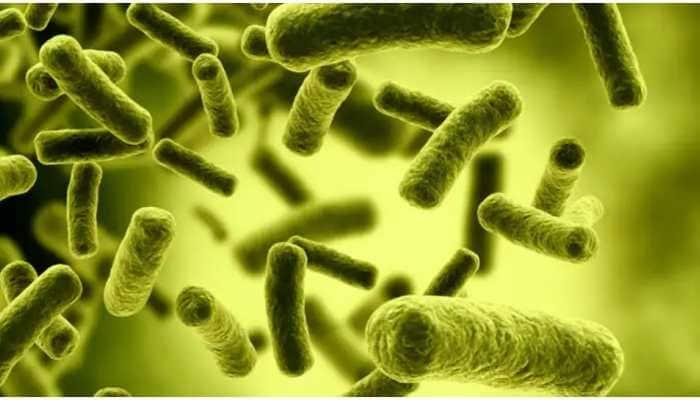 Brain-eating amoeba detected in water supply kills six-year old in US' Texas