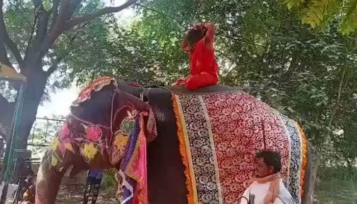 Baba Ramdev falls off elephant while performing yoga at Mathura camp - Watch