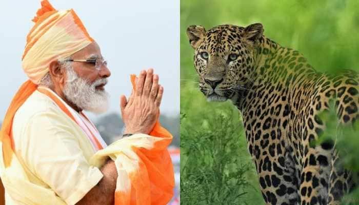 India's leopard count crosses 12800, PM Narendra Modi calls it a 'great news'