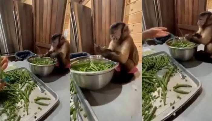 Video of monkey helping woman cut vegetables leaves netizens amused - Watch