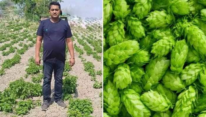 Zee fact file: Bihar farmer's claims of 'Hop-shoots' crop turns out to be fake, check report