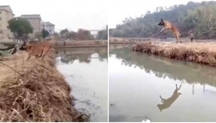 Video of jaw-dropping jump across the canal by a dog goes viral -- Watch