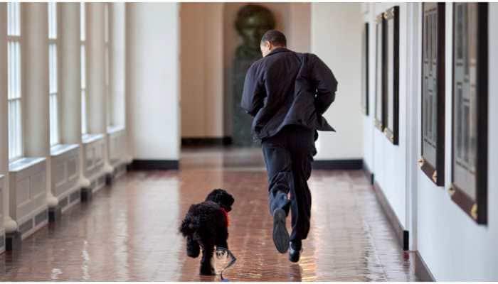 Barack Obama announces death of former US 'first dog', says lost true friend