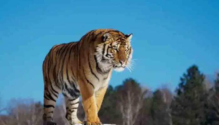 Madhya Pradesh's Satpura Tiger Reserve, Bhedaghat in tentative list of UNESCO world heritage sites
