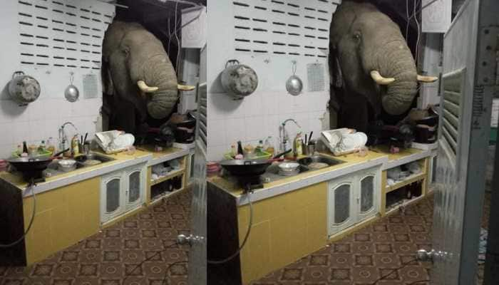 Elephant rams through kitchen wall in search of food, leaves woman stunned